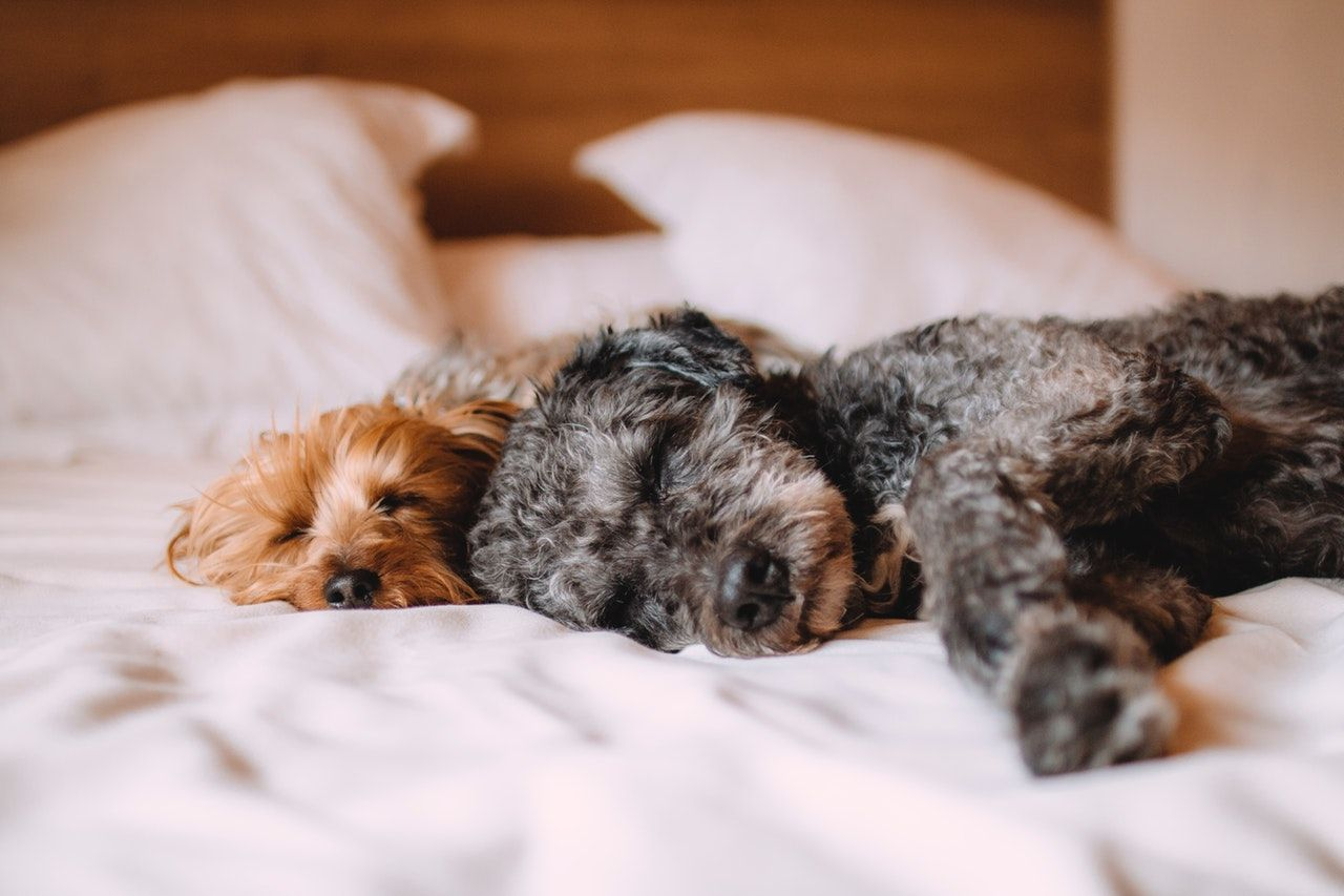 Sleeping with Pets: Is It Healthy?